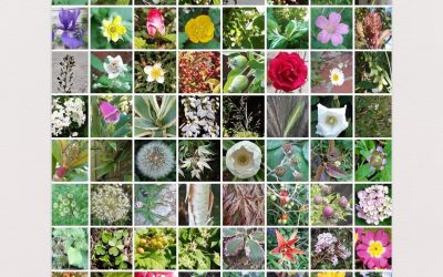 100 Flowers by Paul Henry